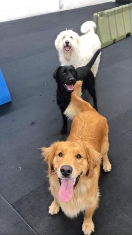 Kane/Ellie/Freya
