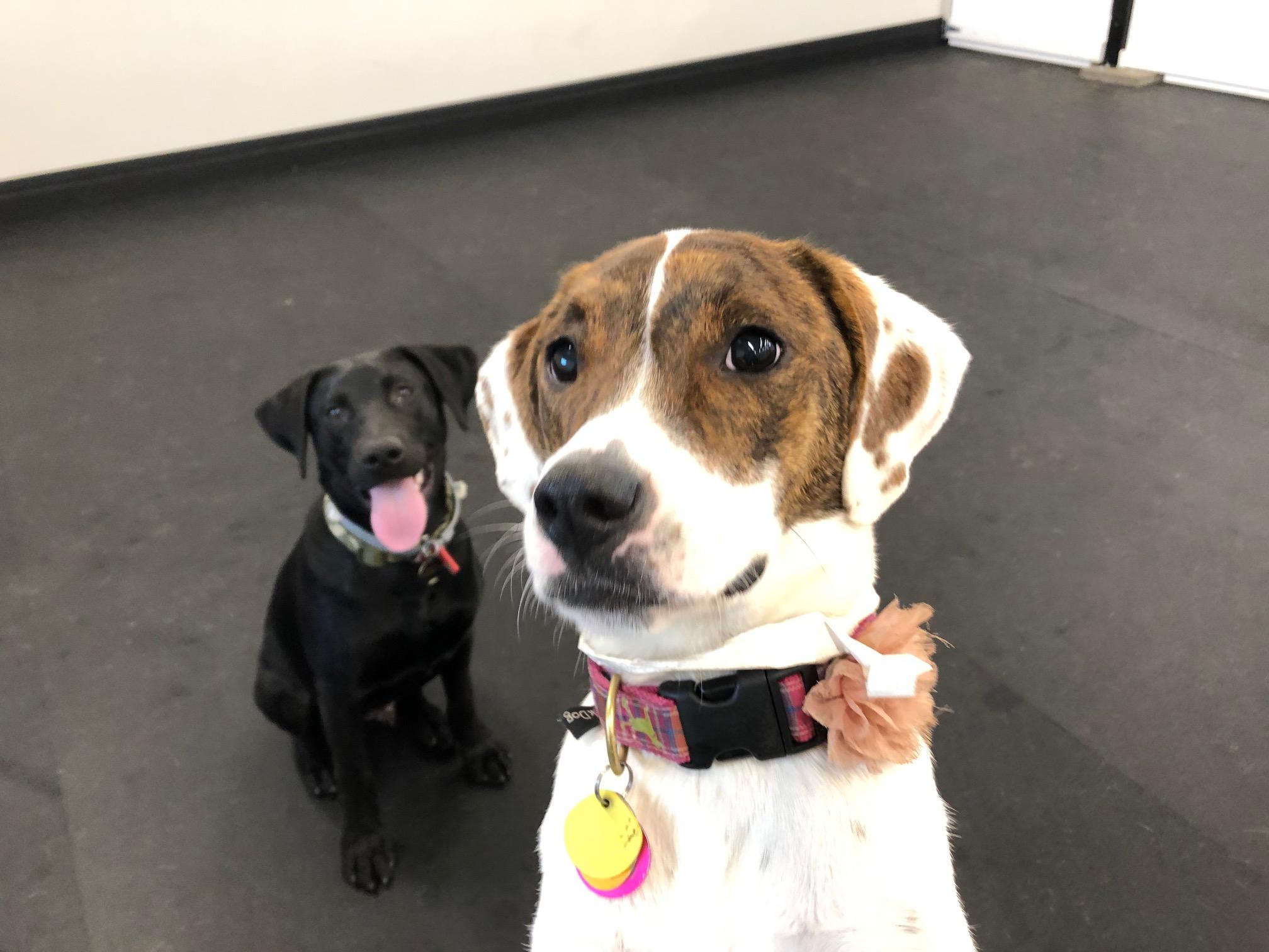 Lola & Darth