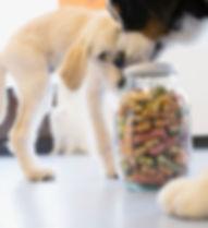Dog food adviser