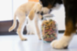 Dogs with Dog Food Jar