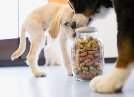 Don't Feed It to Fido: Dog Food Recalls (12 brands)