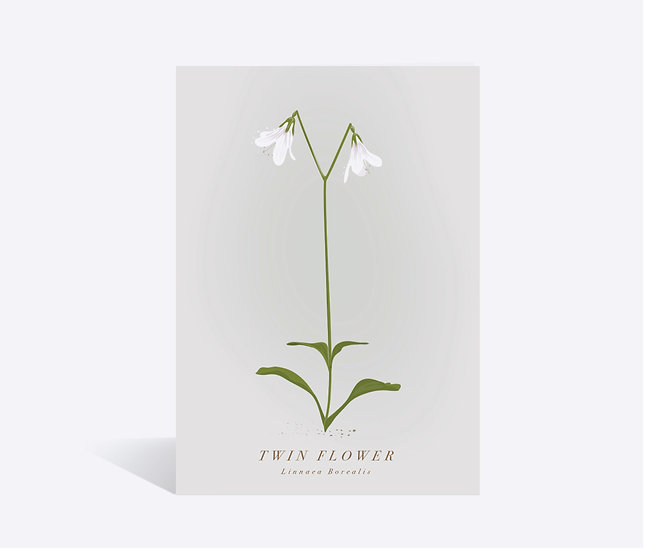 Twin Flower Wildflower Greeting Card