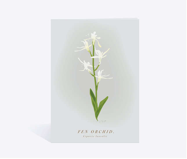 Fen Orchid Wildflower Greeting Card