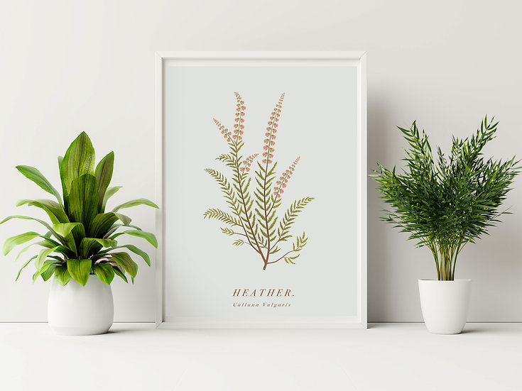 Heather Botanical Illustration
