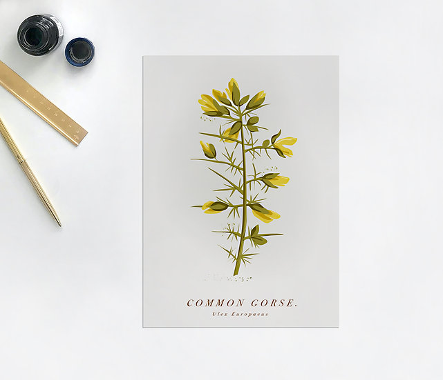Gorse Botanical Postcard