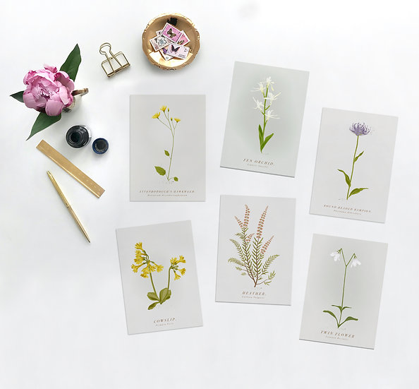 Botanical Postcard Set of 6