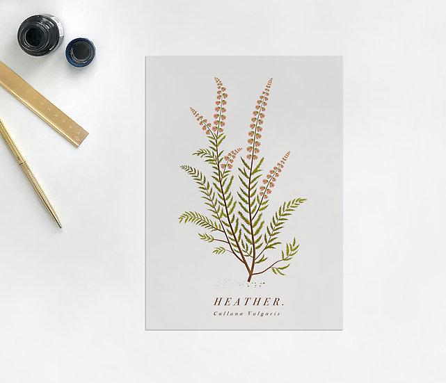 Heather Botanical Postcard
