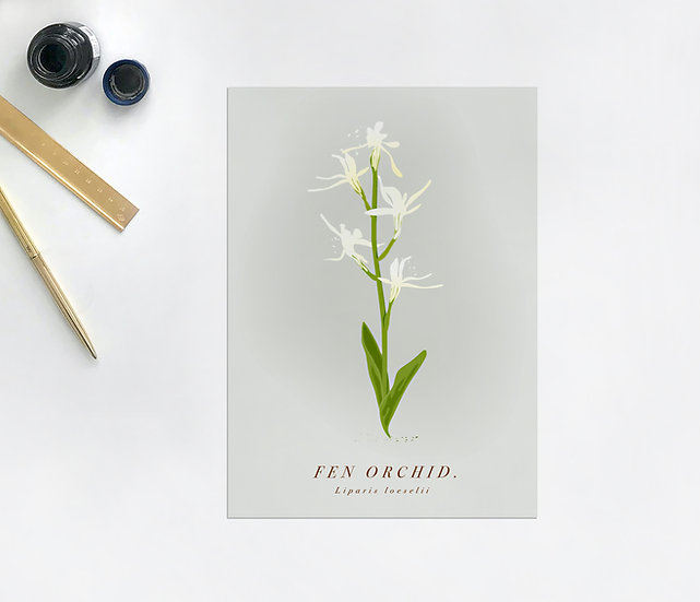 Fen Orchid Botanical Postcard