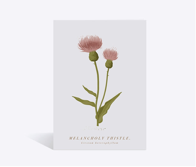 Thistle Wildflower Greeting Card