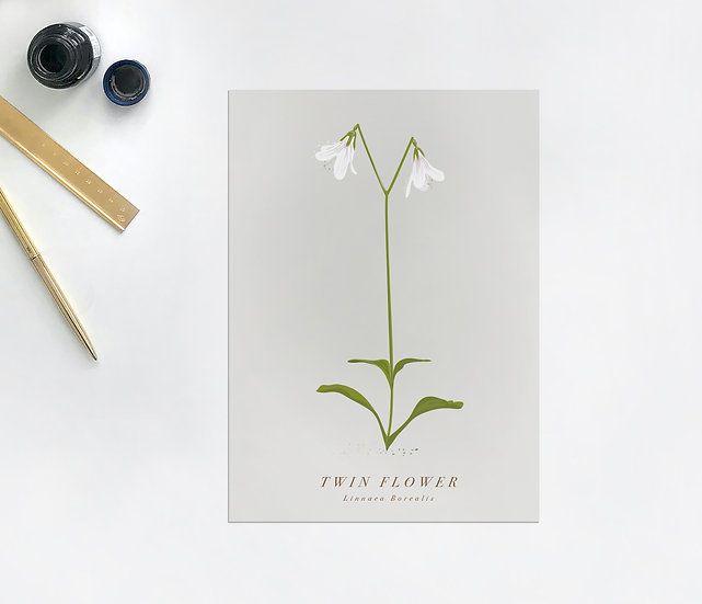 Twin Flower Botanical Postcard