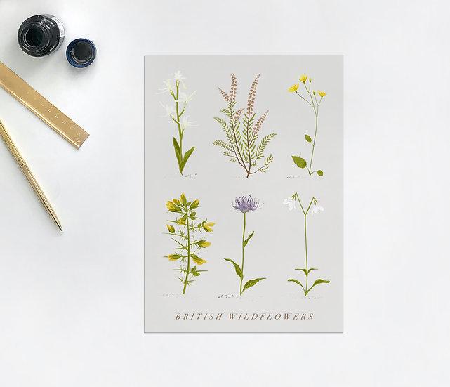 Wildflower Botanical Postcard