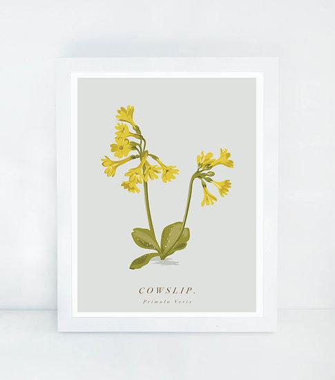 Cowslip Botanical Illustration