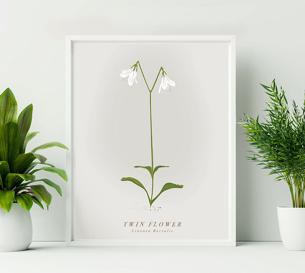 Twin Flower Botanical Illustration