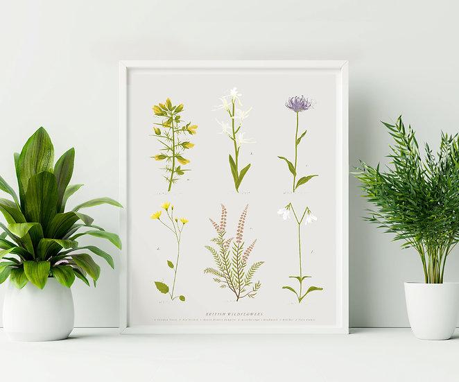 British Wildflower Botanical Illustration