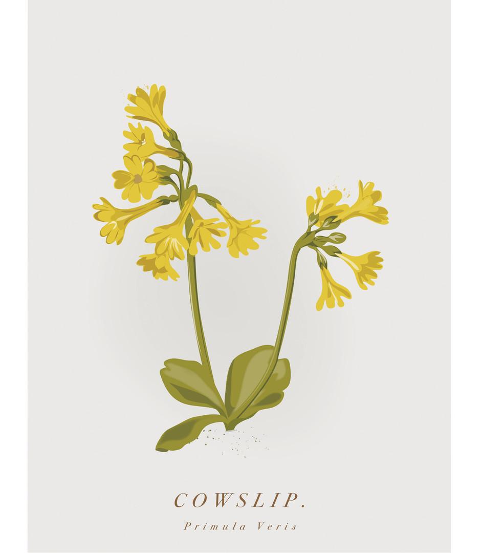 Cowslip_3.jpg