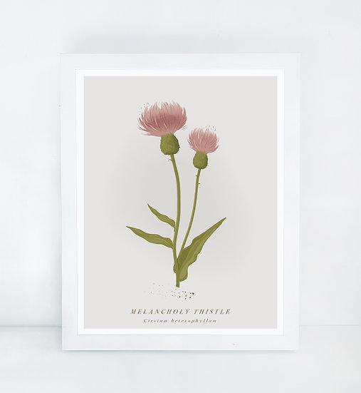 British Melancholy Thistle Botanical Illustration