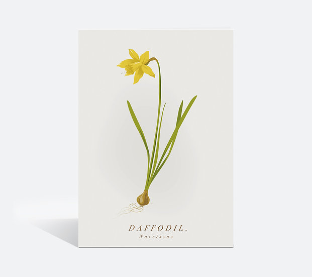 Daffodil Botanical Greeting Card