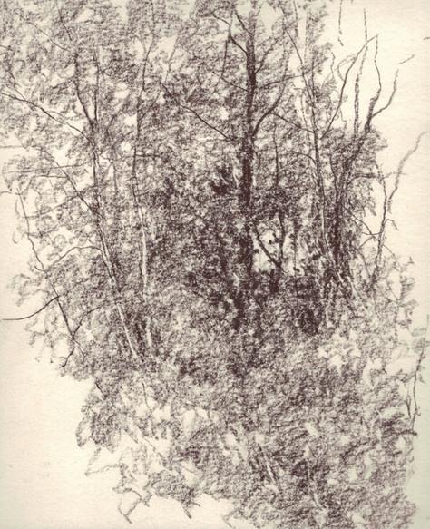 Le bosquet en mars