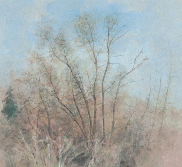 Chênes au printemps