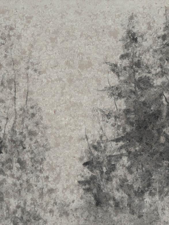 Haie de sapins Fusain, 17 x 17 cm, janvier 2020