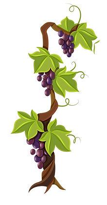 Plant de vigne.jpg