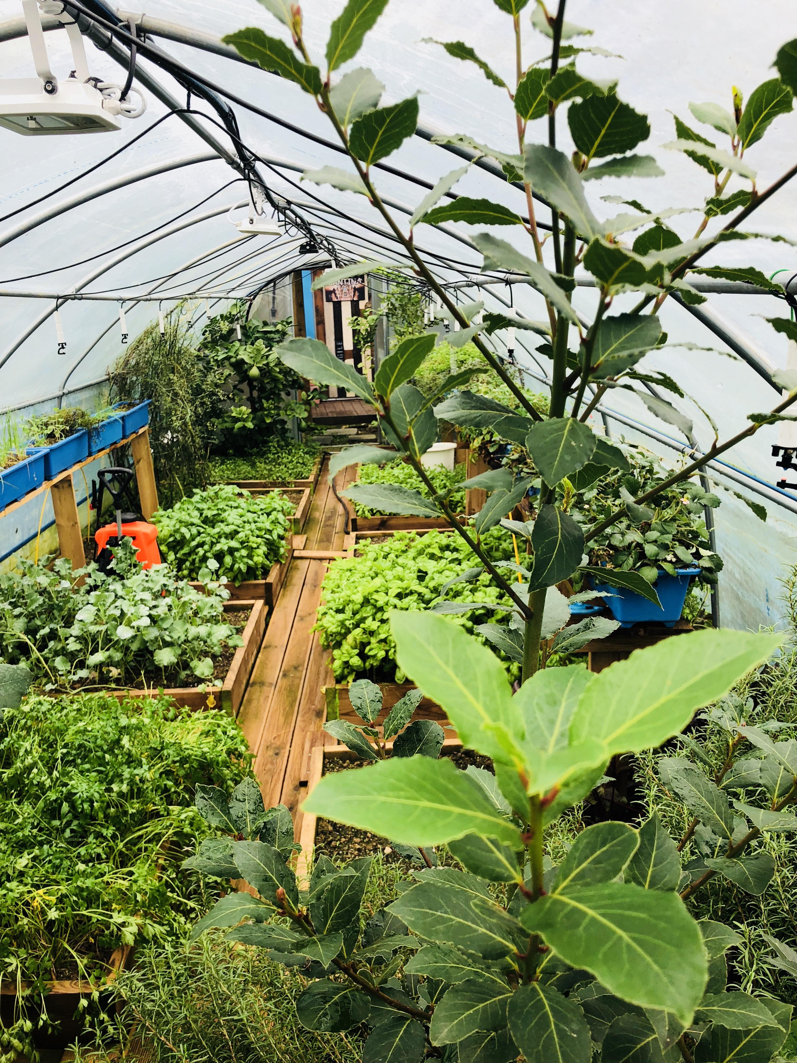 유기농 하우스