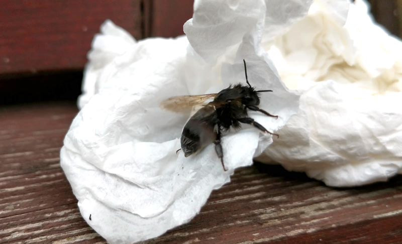 Bee drying itself