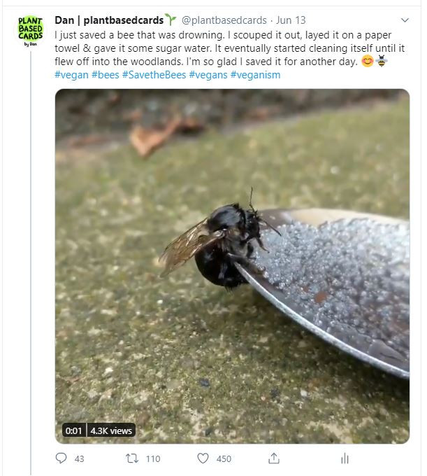 save the bees on twitter