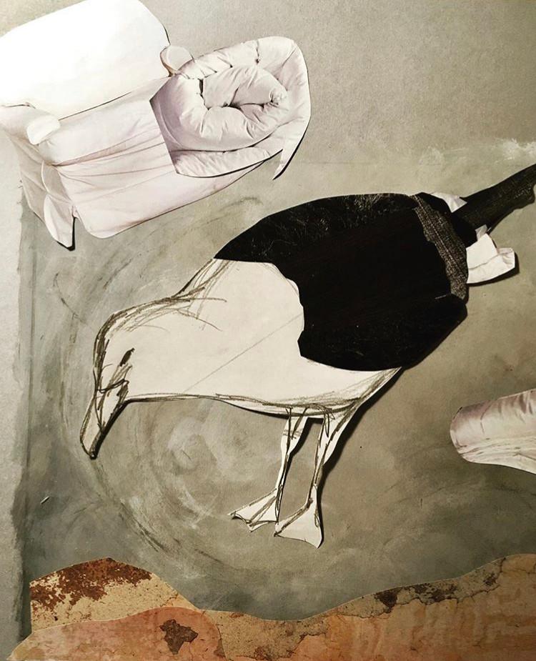 Seagull Development