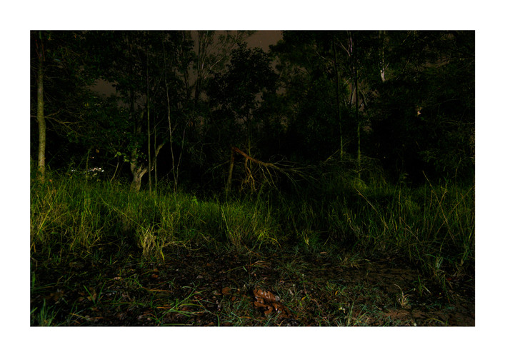 Typical feral cat habitat at night. Kooralbyn, Queensland, Australia