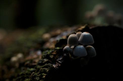Fungi at Binna Burra section of Lamington National Park, Queensland, Australia