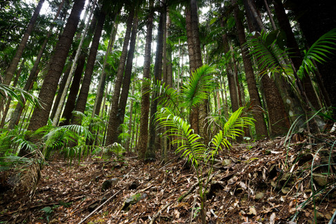 D'Aguilar National Park, Queensland, Australia