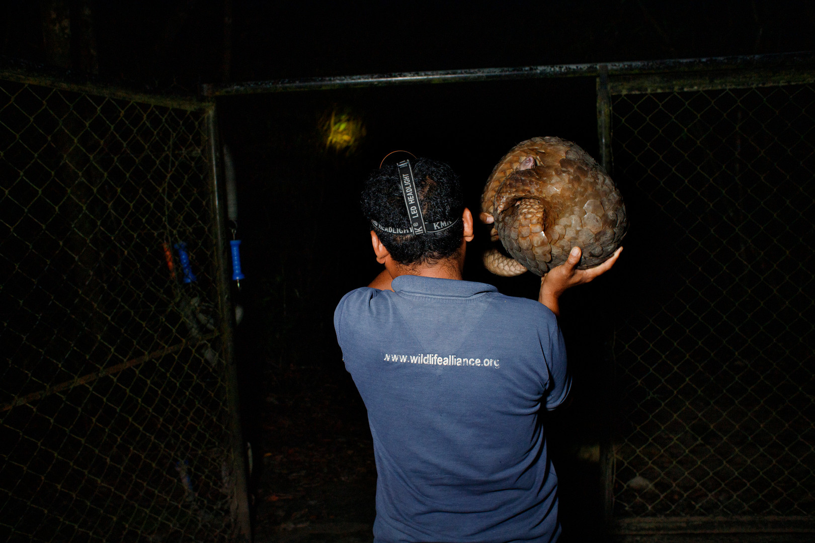 Wildlife Release Station keeper Seoun carries a recently rescued Sunda Pangolin outside of the compound upon its release.