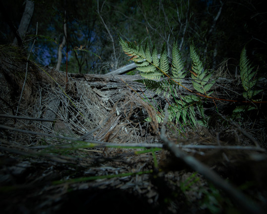 0116Rampant_feral animal project_North Stradbroke_Joshua Prieto Photography10082017.JPG