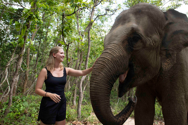 Guests are able to meet Elephants and other animals on Wildlife Alliance's behind the scenes tour to Phnom Tamao Wildlife Rescue Centre.
