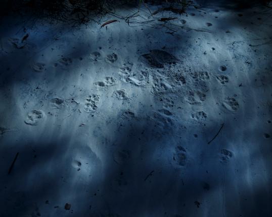 0071Rampant_feral animal project_North Stradbroke_Joshua Prieto Photography10082017.JPG