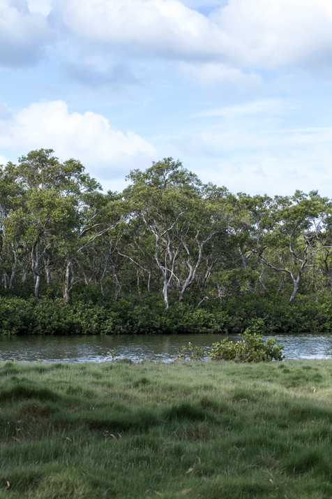 Boondall Wetlands, Queensland, Australia