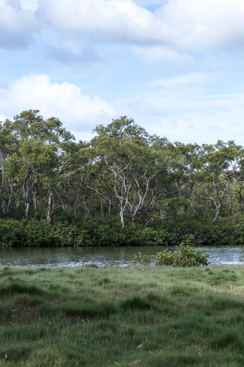 Boondall Wetlands, Queensland, Australia