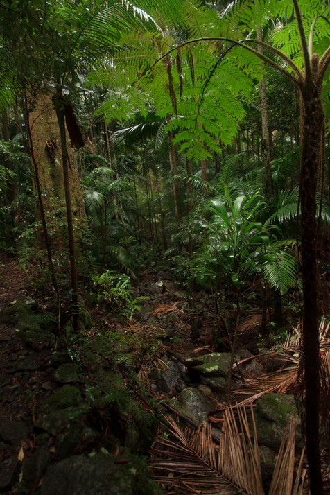 Sub-tropical rainforest of Binna Burra in Lamington National Park, Queensland, Australia