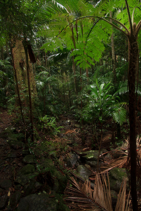 Sub-tropical rainforest of Binna Burra in Lamington National Park, Queensland, Australia