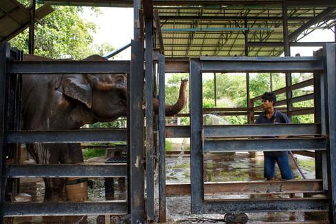 0016Phnom Tamao Elephant Tour01062019.JP