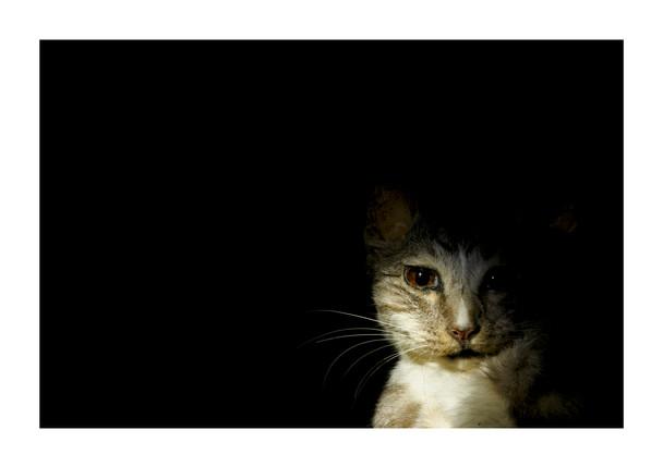 004Rampant Part One_Joshua Prieto Photography.jpg