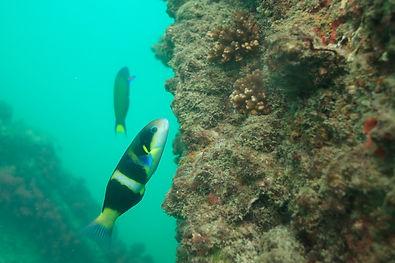 0100_Moreton Island_12052021.JPG