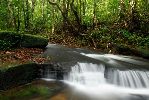 Cardamom Mountains Rainforest, Cambodia