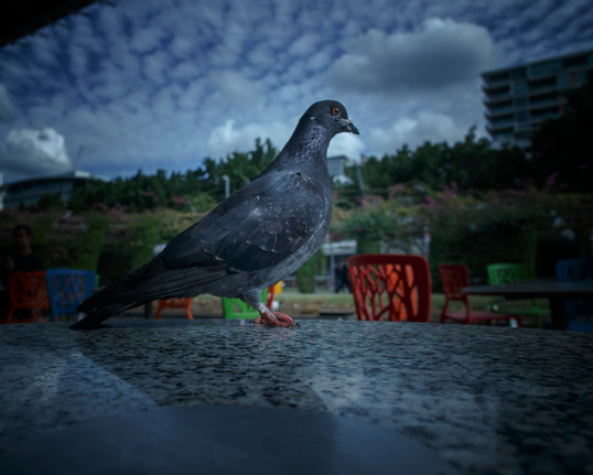 0074Rampant_feral animal project_Joshua Prieto Photography03082017.JPG