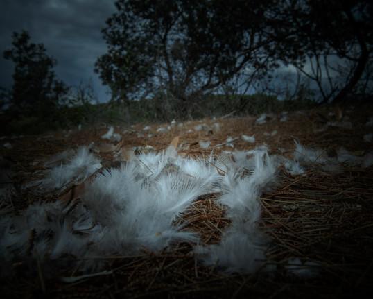 0019rampant project_feral animals_NSI_Joshua Prieto Photography24082017.JPG