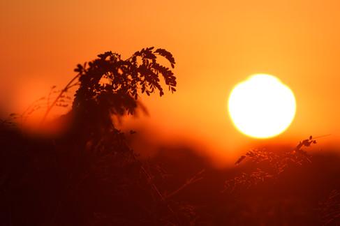 Sunrise in Brisbane, Queensland, Australia