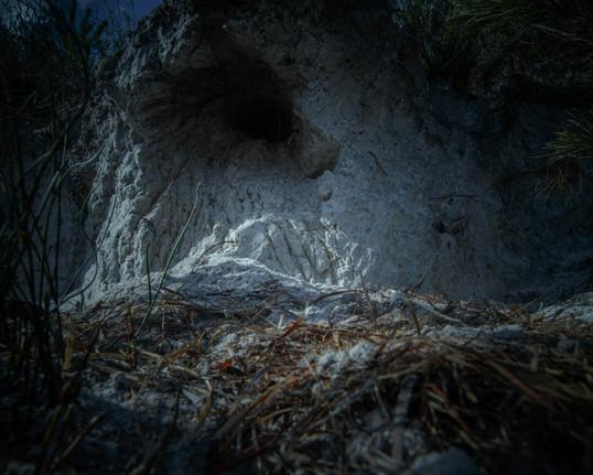 0074rampant project_feral animals_NSI_Joshua Prieto Photography24082017.JPG