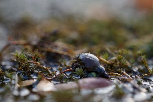 Snail Chalfont, England