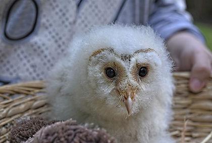 owl-5564354_1920.jpg